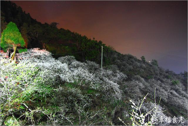 【南投信義賞梅秘境】南投梅花季之賞梅景點「頂峰梅園」夢之地