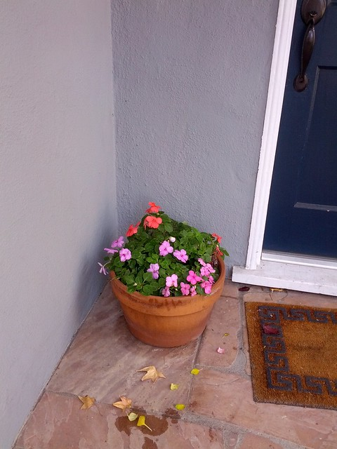 Impatiens on the front porch, November 22