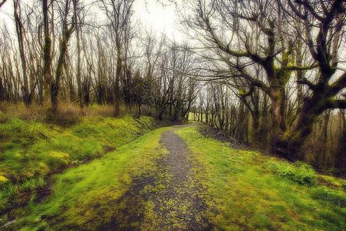 trees path trail columbiarivergorge onone