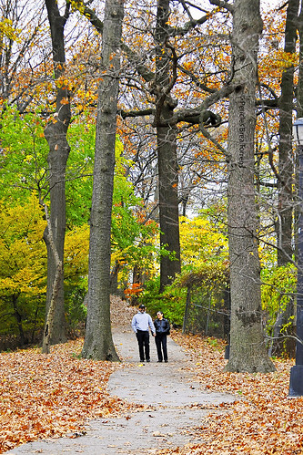 autumn usa newyork landscape paisaje queens otoño forestpark pbt2618