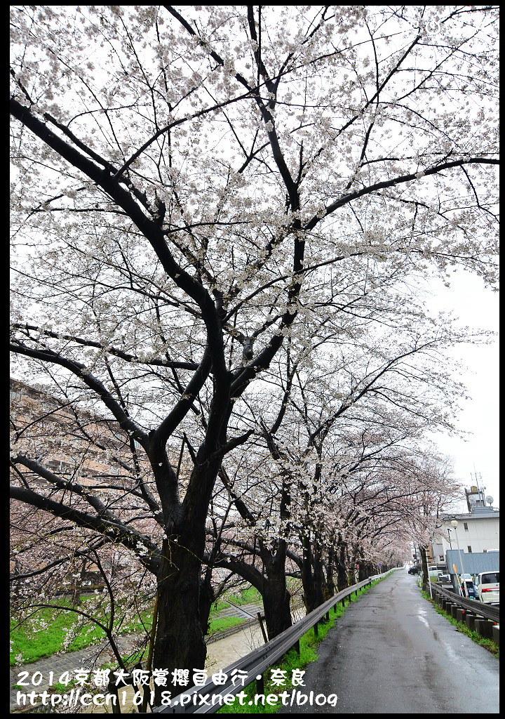 2014京都大阪賞櫻自由行.奈良DSC_0807