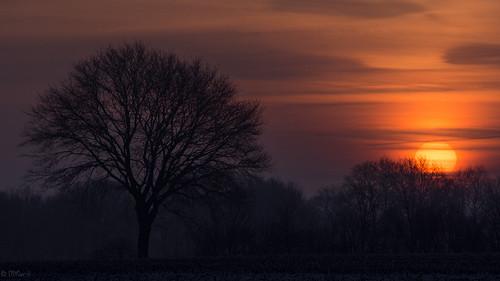 winter sun pen sunrise germany deutschland foto olympus f80 northern sonne sonnenaufgang nord niedersachsen 150mm aufnahme ohz osterholzscharmbeck mzuiko ohlenstedt epl5