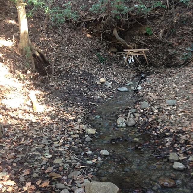 段丘下の湧水。水量あるな!