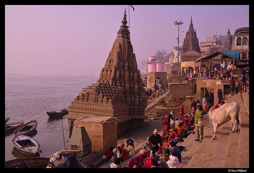 city morning urban india river cow cityscape riverside varanasi hindu ganges d800 ghat 2014 uttarpradesh