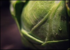 Brussel Sprout 2 -color  38/100