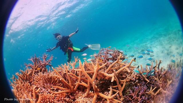 サンゴキレイゾーンではデバスズメダイがどこもかしこも産卵してました♪