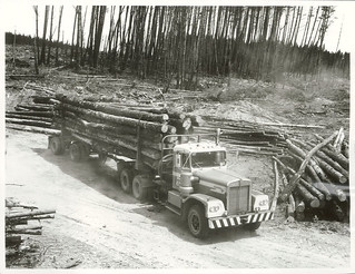 Iwitahi Forest. A Kenworth logging truck with a 26 ton load of Pinus Radiata on its way out of the Iwitahi Forest