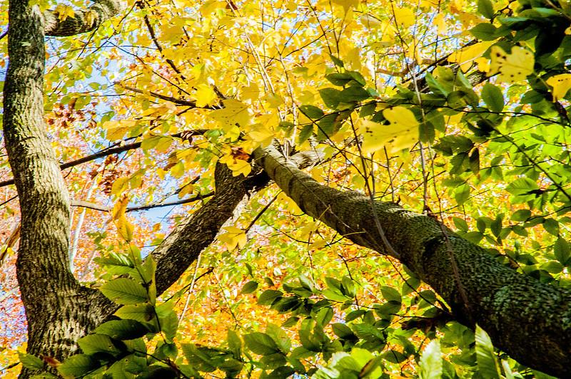 Tribbett Woods Nature Preserve - October 25, 2014