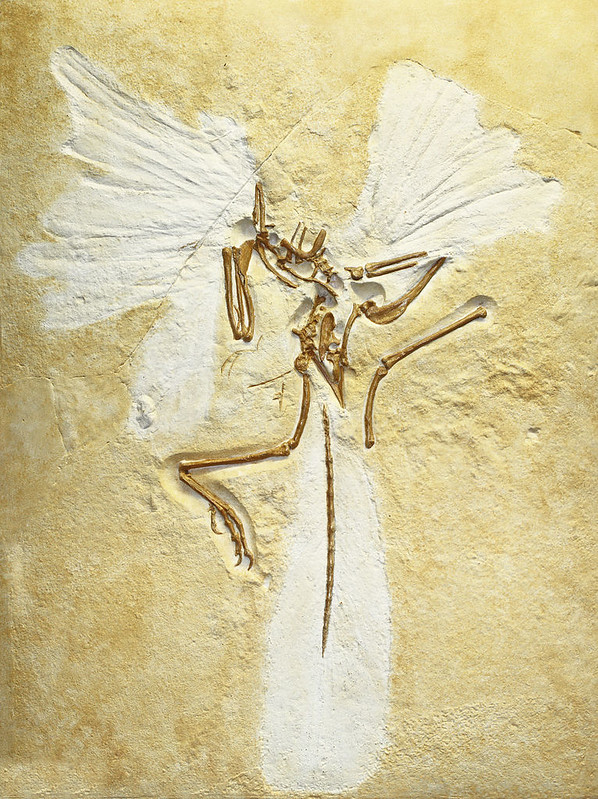 Archaeopteryx, replica of London specimen