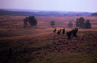 15 Lüneburger Heide 1987