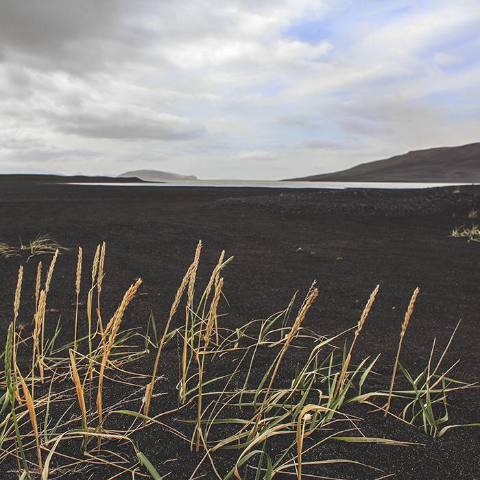 Iceland_Spiegeleule_August2014 155