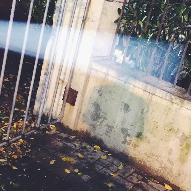 A beam of light shining on the homelss cat.  夜晚的汽车大灯打在小野猫上。 #cat#vscocam#shanghai#上海#猫#kitty#catsofinstagram#flasheyescat#电眼猫
