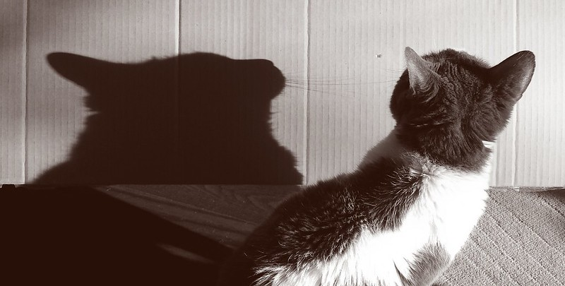 Remi cat shadow.