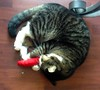 Watson loves his new hot pepper cat nip toy