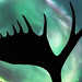 Yukon Silhouette by Don Komarechka
