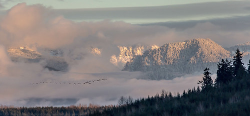 trees winter sunset white snow mountains green nature landscape geese