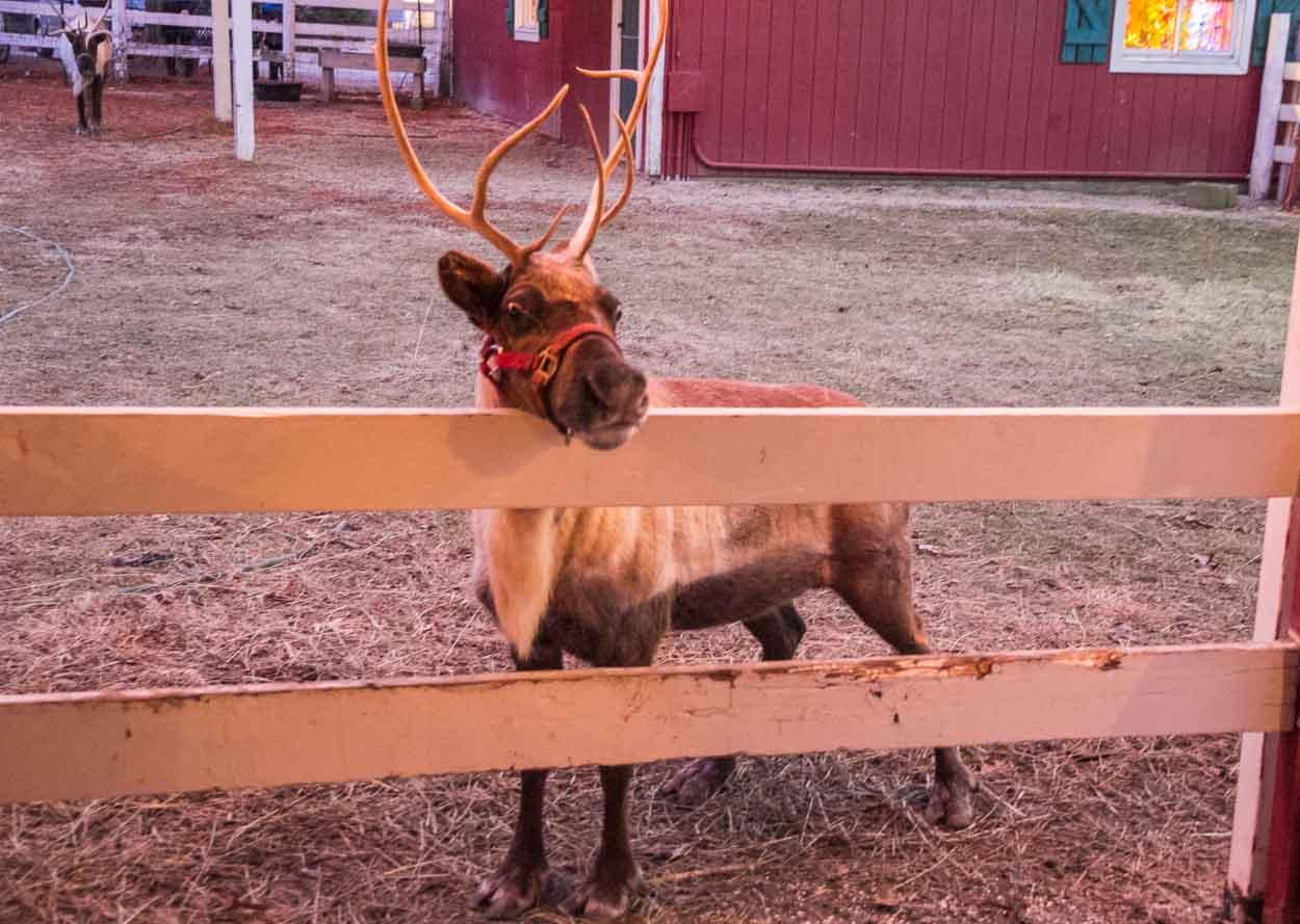 Auf den Spuren von Rudolph dem Rentier
