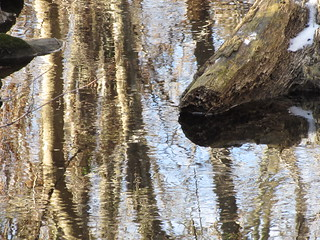 A Tree's Reflection