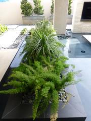 arecales(0.0), flower arranging(0.0), flower(0.0), floristry(0.0), bonsai(0.0), shrub(1.0), tree(1.0), plant(1.0), houseplant(1.0),