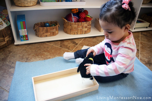 Exploring the Penguin Tray