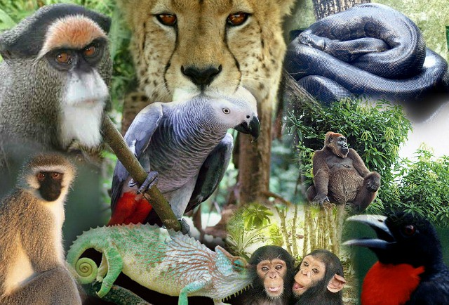 animales-diarioecologia