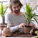 Die Yucca ist Pflanze des Monats Januar 2015