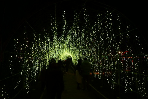 yellow wisteria Flower Fantasy 2015 illumination at Ashikaga Flower Park 15