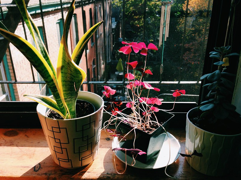 morning light and my plants