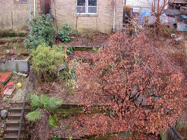 Garden, early January