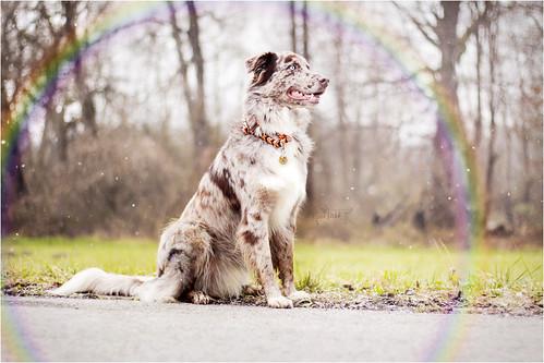 Kjara Kocbek Animal Photography - Page 5 15585057534_7c5911df13
