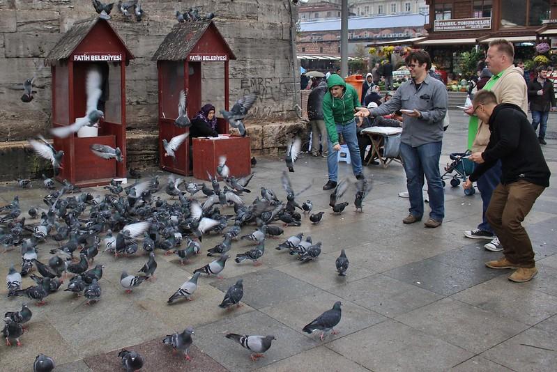 bird feeding, Istanbul, Turkey