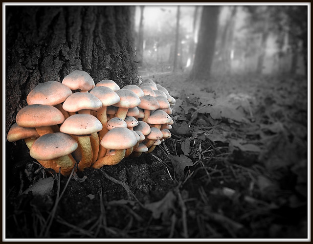 Mushrooms (23-11-2014).