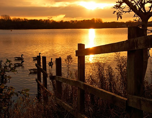 sunset color colour reflection water fence geese sony fencing ripples leigh penningtonflash brantacanadensis canadageese a65 sonya65 slta65