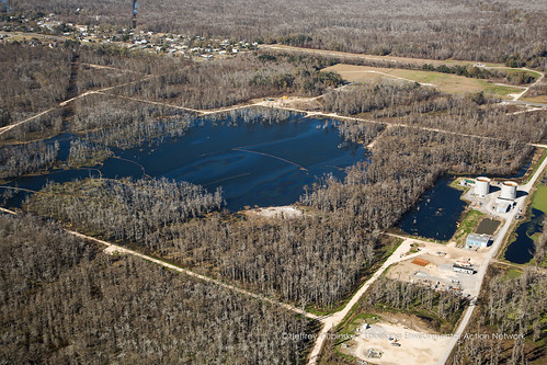 louisiana unitedstates collapse wetlands oil sinkhole cypresstrees bellerose saltdome bayoucorne