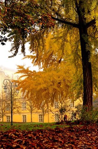 Nebbiolina in pieno centro a Torino