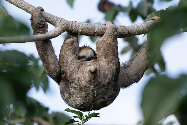 IMG_6021_sloth