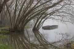 Brouillard sur la Seine (2)