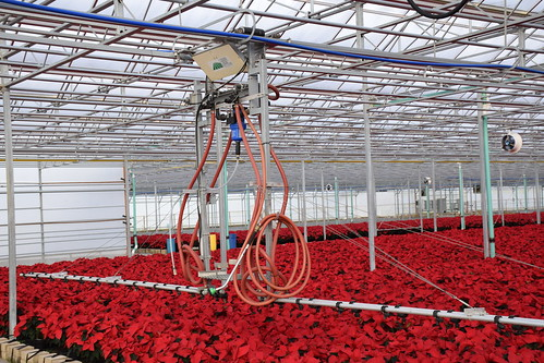 Grower Direct Farms has worked with USDA's Natural Resources Conservation Service in installing micro-irrigation watering systems in its farm's greenhouses. NRCS photo by Analia Bertucci.