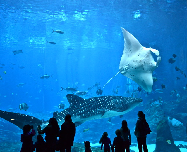Atlanta Georgia Aquarium Review