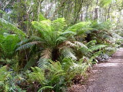 arecales, fern, garden, tree, forest, natural environment, ostrich fern, biome, vegetation,