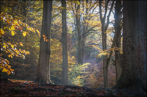 november autumn 2012 nikond90 blaisewoods photographybyjeremyfennell