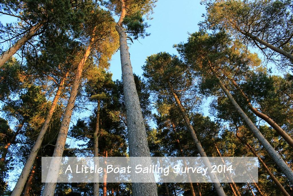 Blog Survey
