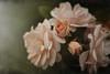 Blommorna-1