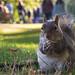 St James's Park Squirrel