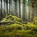 Hoh Rainforest Log Jam by Dan Mihai