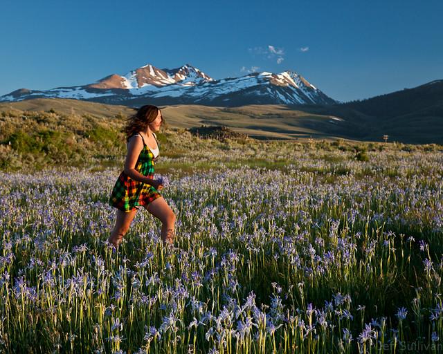 Eastern Sierra Wild Iris