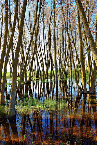 Backlight, Vertical composition, Grass, Wetland, Campos branch, The Canal of Castile, Valladolid, Spain
