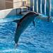 150216 Enoshima Aquarium-05.jpg