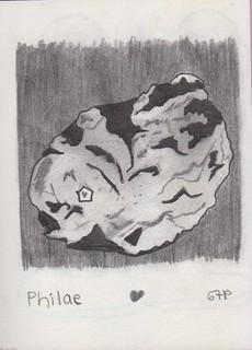 14 Philae