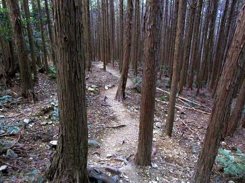 tree nature japan hiking walkway 日本 kansai ise mie eastasia 伊勢市 2013 三重県 mountasama 関西地方 朝熊山 201311 20131122